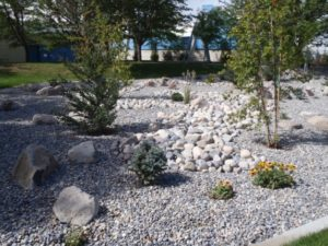 Xeriscaping is a great way to conserve water.