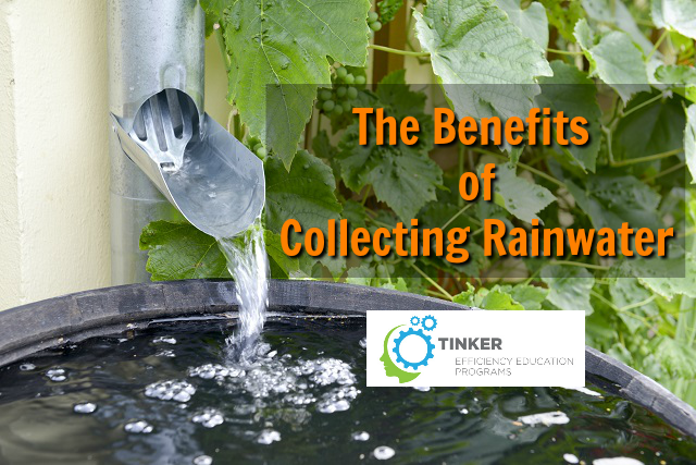 The Benefits of Collecting Rainwater