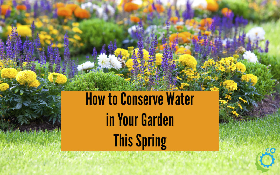 How to Conserve Water in Your Garden This Spring