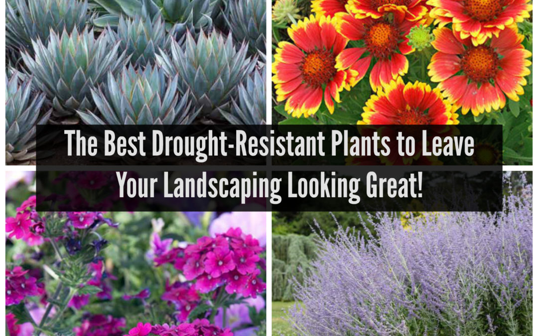 The Best Drought-Resistant Plants to Leave Your Landscaping Looking Great!