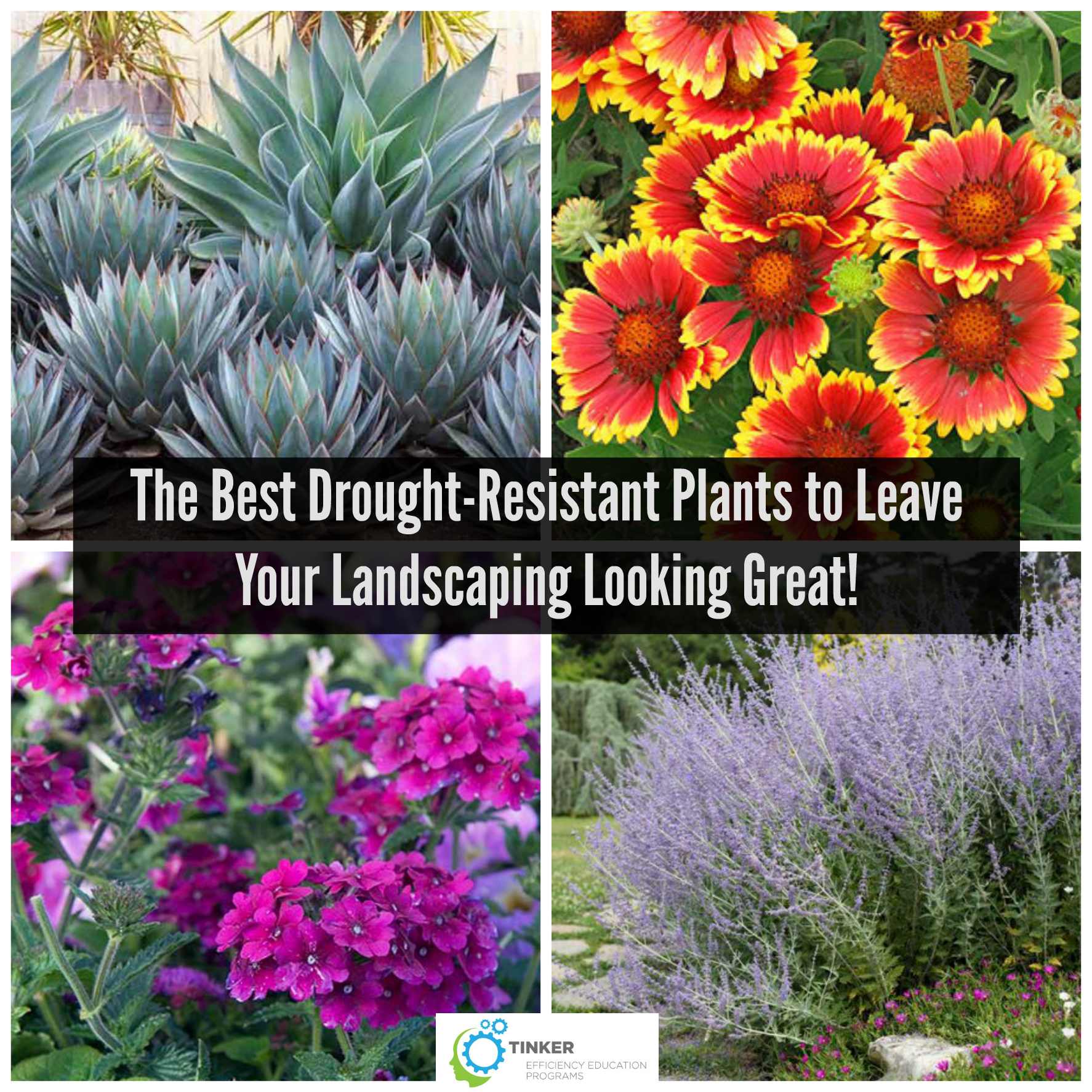 The Best Drought Resistant Plants To
