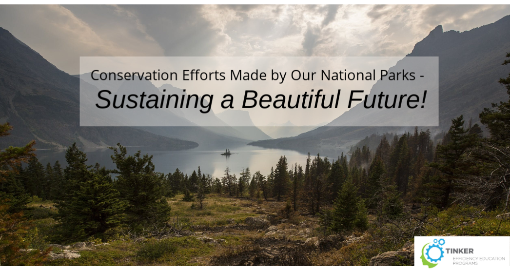 Conservation Efforts Made by Our National Parks – Sustaining a Beautiful Future!